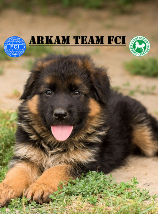 Arkam Team FCI
