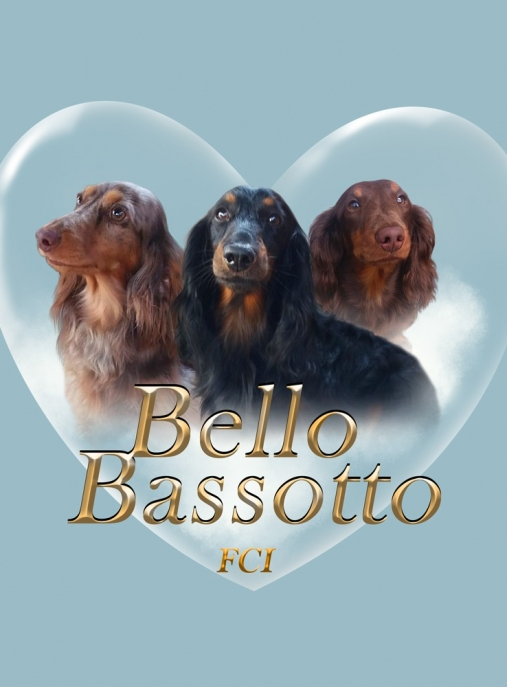 BELLO BASSOTTO FCI