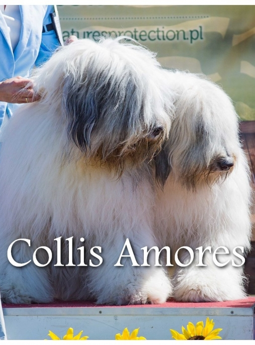Collis Amores