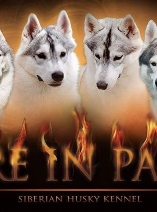 FIRE IN PAWS ( FCI )