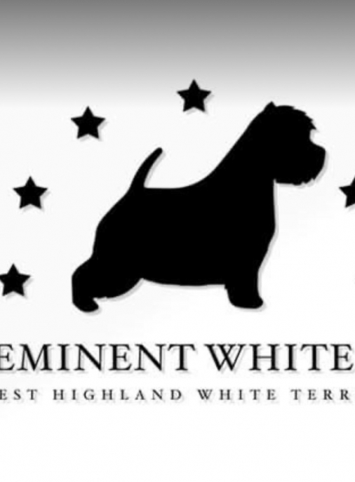 Preeminent White Dog